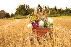 Λουλούδια συγκομιδών Στοκ Εικόνες