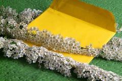 Λουλούδια σύνθεσης του spirea και του φακέλου Στοκ φωτογραφία με δικαίωμα ελεύθερης χρήσης