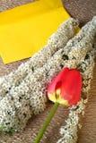 Λουλούδια σύνθεσης του spirea και του φακέλου Στοκ εικόνα με δικαίωμα ελεύθερης χρήσης