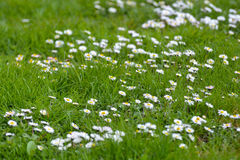 Λουλούδια τέλεια για το υπόβαθρο Στοκ Εικόνες