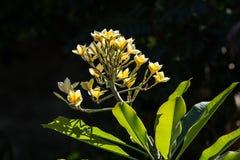 Λουλούδια της Ινδονησίας Στοκ εικόνα με δικαίωμα ελεύθερης χρήσης