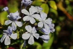 Λουλούδια της Ισπανίας Στοκ Εικόνες