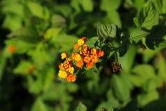Λουλούδια της Ισπανίας Στοκ εικόνα με δικαίωμα ελεύθερης χρήσης