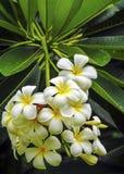 Λουλούδια της Ταϊλάνδης που τακτοποιούνται Στοκ εικόνα με δικαίωμα ελεύθερης χρήσης