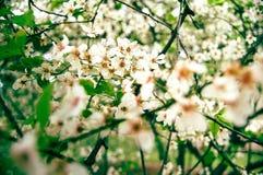 Λουλούδια της ψύχρας Στοκ φωτογραφία με δικαίωμα ελεύθερης χρήσης