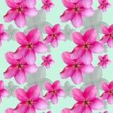 Λουλούδια της Apple Άνευ ραφής σύσταση σχεδίων των λουλουδιών floral Στοκ Φωτογραφία