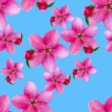 Λουλούδια της Apple Άνευ ραφής σύσταση σχεδίων των λουλουδιών Floral backg Στοκ φωτογραφίες με δικαίωμα ελεύθερης χρήσης