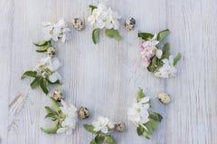Λουλούδια της Apple και αυγά ορτυκιών Στοκ Φωτογραφίες
