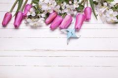 Λουλούδια της Apple και ρόδινες τουλίπες στο άσπρο ξύλινο υπόβαθρο Στοκ Εικόνες