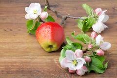 Λουλούδια της Apple και ώριμα κόκκινα μήλα Στοκ φωτογραφίες με δικαίωμα ελεύθερης χρήσης