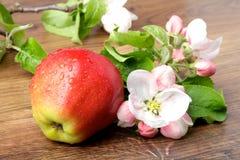 Λουλούδια της Apple και ώριμα κόκκινα μήλα Στοκ Εικόνα