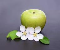 Λουλούδια της Apple και ώριμο κόκκινο πράσινο μήλο στην κινηματογράφηση σε πρώτο πλάνο υποβάθρου Στοκ φωτογραφία με δικαίωμα ελεύθερης χρήσης