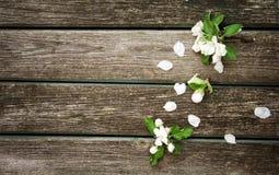 Λουλούδια της Apple στον ξύλινο πίνακα Στοκ Φωτογραφίες