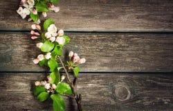 Λουλούδια της Apple στον ξύλινο πίνακα Στοκ Εικόνα