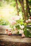 Λουλούδια της Apple στον ξύλινο πίνακα Στοκ εικόνα με δικαίωμα ελεύθερης χρήσης