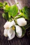 Λουλούδια της Apple στο ξύλινο υπόβαθρο Στοκ Εικόνες