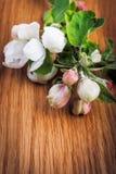 Λουλούδια της Apple στο ξύλινο υπόβαθρο Στοκ φωτογραφία με δικαίωμα ελεύθερης χρήσης