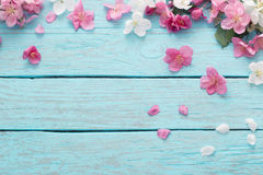 Λουλούδια της Apple στο ξύλινο υπόβαθρο Στοκ εικόνα με δικαίωμα ελεύθερης χρήσης