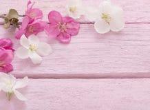 Λουλούδια της Apple στο ξύλινο υπόβαθρο Στοκ εικόνες με δικαίωμα ελεύθερης χρήσης