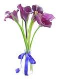 Λουλούδια της Calla lilly Στοκ Εικόνα