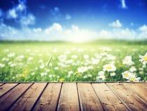 Λουλούδια της Daisy και ξύλινο πάτωμα Στοκ φωτογραφία με δικαίωμα ελεύθερης χρήσης