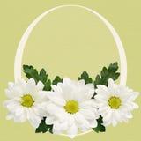Λουλούδια της Daisy με το πλαίσιο Πάσχας Στοκ Φωτογραφίες