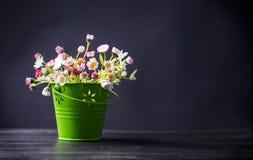 Λουλούδια της Daisy σε ένα πράσινο δοχείο Στοκ φωτογραφία με δικαίωμα ελεύθερης χρήσης