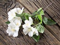 Λουλούδια της Jasmine πέρα από τον παλαιό ξύλινο πίνακα Στοκ Εικόνες