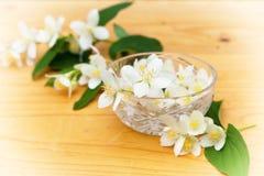 Λουλούδια της Jasmine σε ένα κύπελλο γυαλιού Στοκ Εικόνες