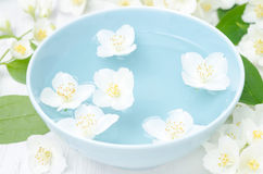 Λουλούδια της Jasmine σε ένα μπλε κύπελλο για aromatherapy Στοκ φωτογραφίες με δικαίωμα ελεύθερης χρήσης