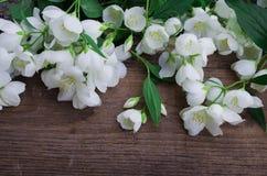 Λουλούδια της Jasmine σε ένα σκοτεινό ξύλο Στοκ Εικόνες