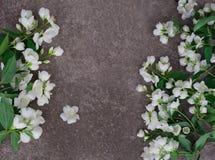 Λουλούδια της Jasmine στην γκρίζα πέτρα Στοκ Εικόνα