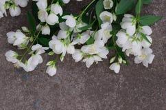 Λουλούδια της Jasmine στην γκρίζα πέτρα Στοκ Εικόνες