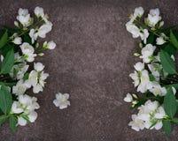Λουλούδια της Jasmine στην γκρίζα πέτρα Στοκ Φωτογραφίες
