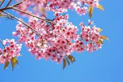 Λουλούδια τιγρών Στοκ φωτογραφία με δικαίωμα ελεύθερης χρήσης