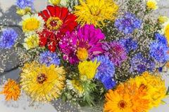 Λουλούδια τομέων για το υπόβαθρο Στοκ Φωτογραφίες
