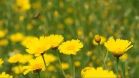 Λουλούδια τομέων μελισσών απόθεμα βίντεο