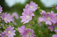 Λουλούδια τομέων Στοκ Εικόνα