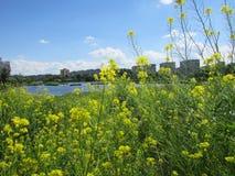 Λουλούδια τομέων Στοκ φωτογραφία με δικαίωμα ελεύθερης χρήσης