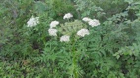 Λουλούδια του δάσους Στοκ φωτογραφίες με δικαίωμα ελεύθερης χρήσης