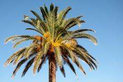 Λουλούδια του δέντρου του palme Στοκ φωτογραφία με δικαίωμα ελεύθερης χρήσης
