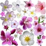 Λουλούδια του ανθίζοντας κήπου Στοκ φωτογραφία με δικαίωμα ελεύθερης χρήσης