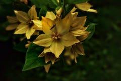 Λουλούδια του Ελσίνκι Στοκ εικόνα με δικαίωμα ελεύθερης χρήσης