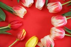 Λουλούδια τουλιπών άνοιξη Στοκ Εικόνα