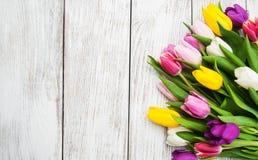 Λουλούδια τουλιπών άνοιξη Στοκ εικόνα με δικαίωμα ελεύθερης χρήσης