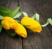 Λουλούδια τουλιπών άνοιξη Στοκ Εικόνες