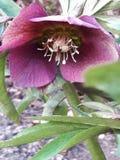 Λουλούδια του κήπου μου Στοκ φωτογραφία με δικαίωμα ελεύθερης χρήσης