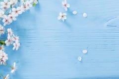 Λουλούδια του κερασιού στο μπλε ξύλινο υπόβαθρο Στοκ Εικόνα