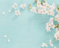 Λουλούδια του κερασιού στο ξύλινο υπόβαθρο Στοκ Φωτογραφίες