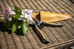 Λουλούδια του μήλου που κόβονται με το ψαλίδι Στοκ εικόνα με δικαίωμα ελεύθερης χρήσης